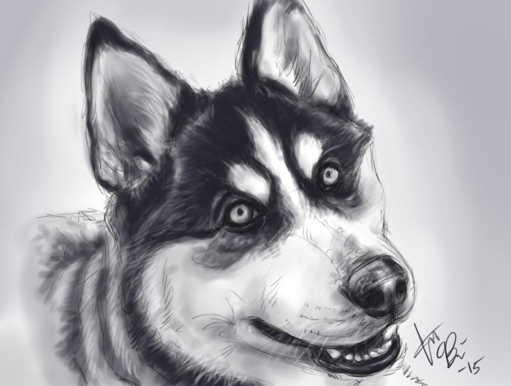 Husky by RedEyedDemon