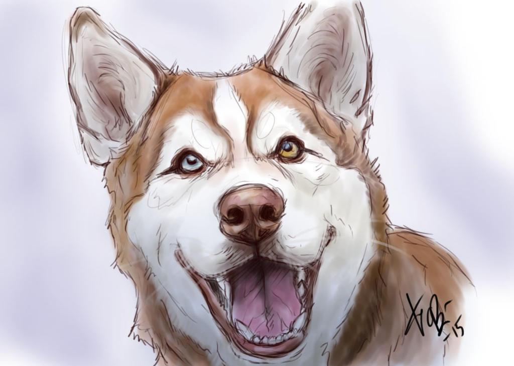 Husky Two by RedEyedDemon