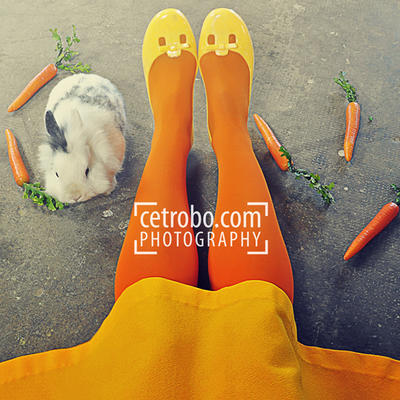 Carrots, rabbit and legs by cetrobo
