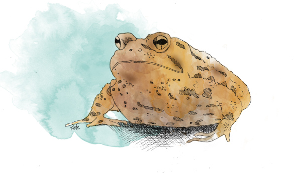 Toad by oslokate