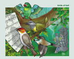 birds of bali by putuebo