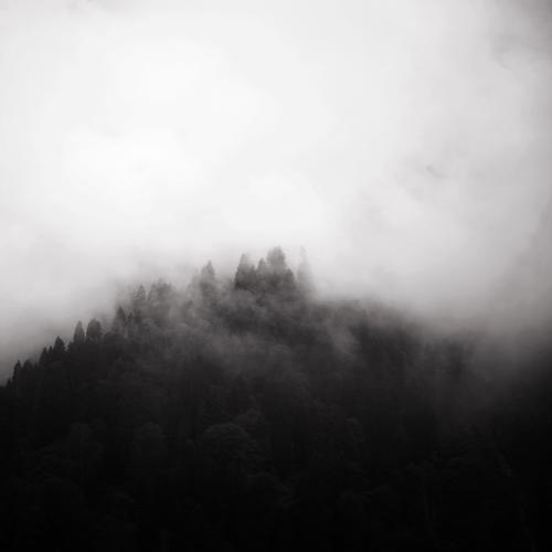 in the mist   5 by selimselimoglu
