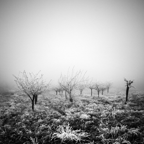 cold by selimselimoglu