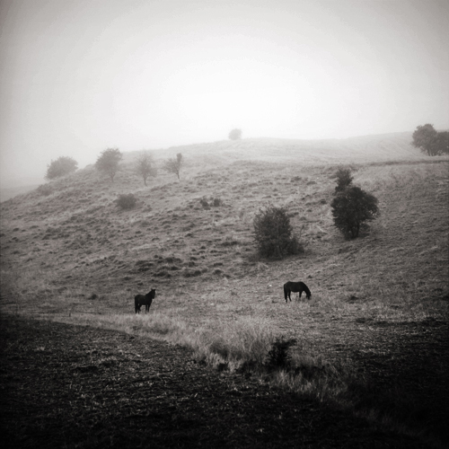 two horses by selimselimoglu