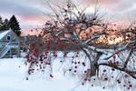 Apple Tree by Aeon-Phoenix