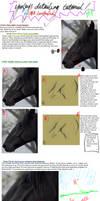 Equine Detailing Tutorial