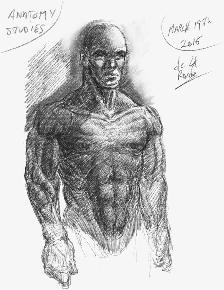 Anatomy Studies by delaronde