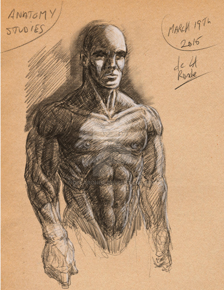 Anatomy Studies B by delaronde