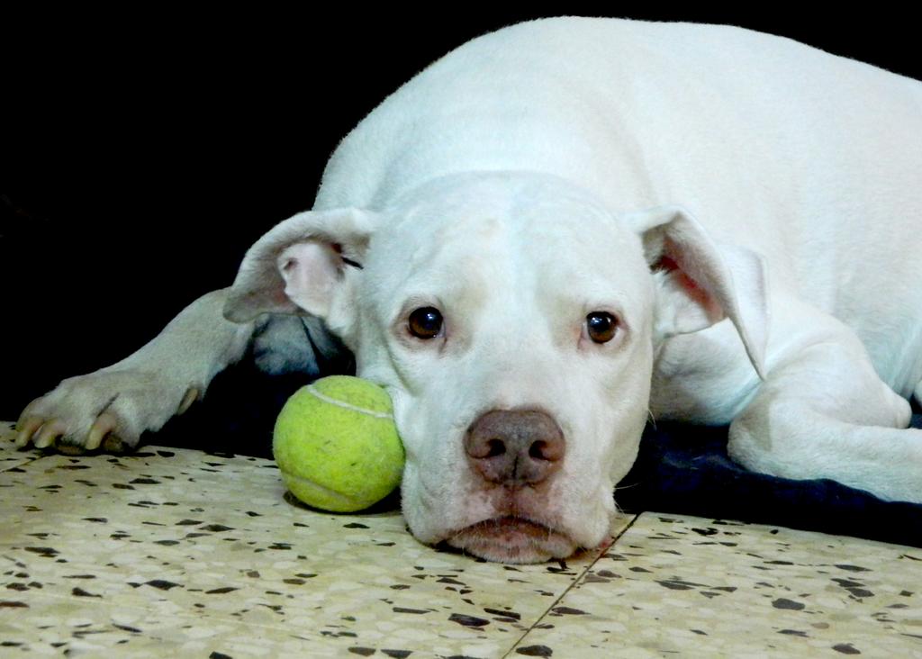 Miss You sad doggie by YANKA-arts-n-crafts
