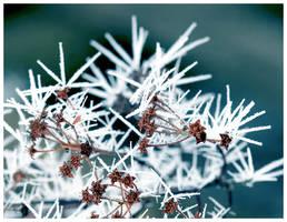 Frost Sculptures