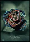 Luxury Rose Revival