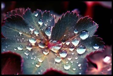Rainy May -FULL- by Viliggoly