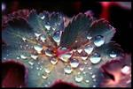 Rainy May -FULL-