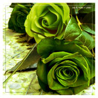 Green Like Hope by Viliggoly