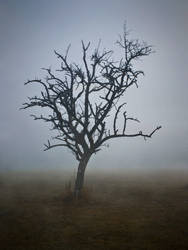 desolation by NoiZe-B