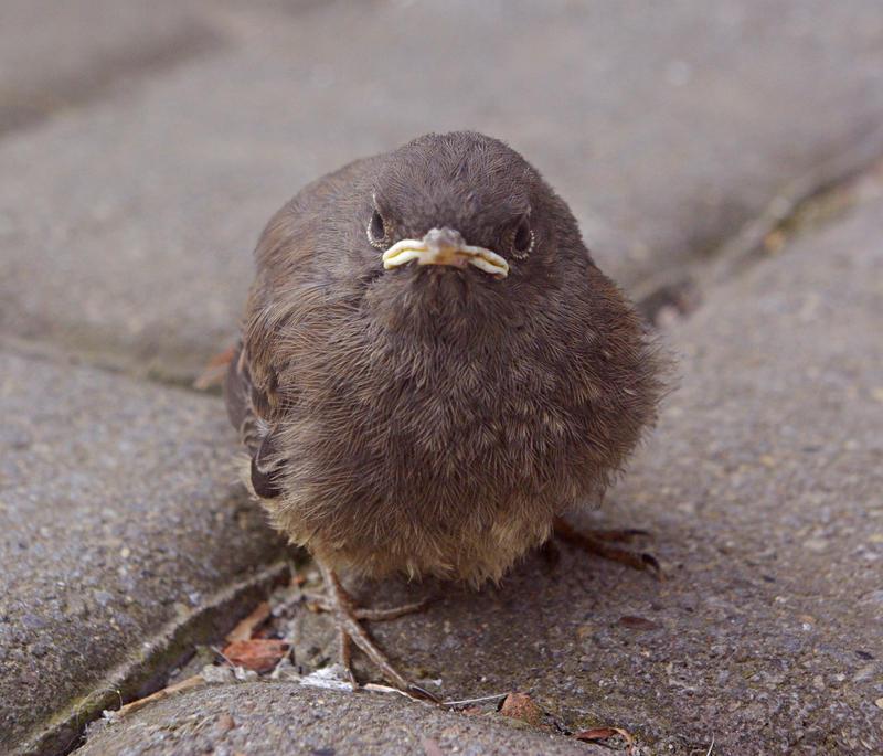 Grumpy Gerd. by PassionateLovestory