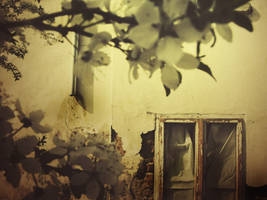 Flori de mucegai by onck903
