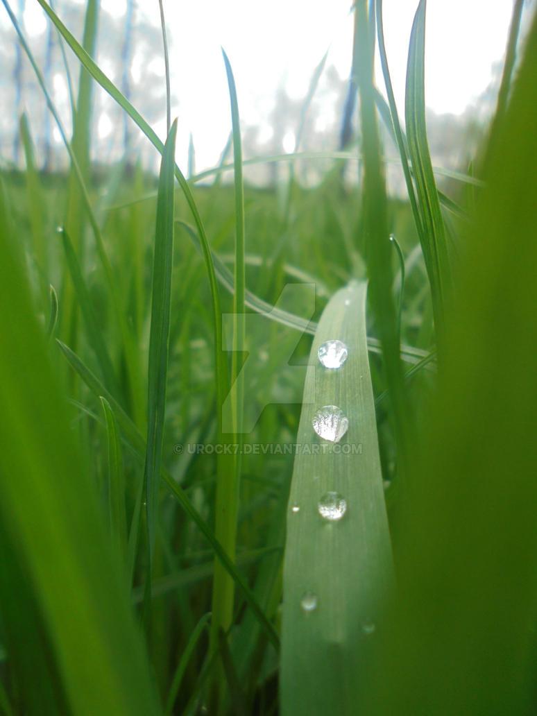 Green by URock7