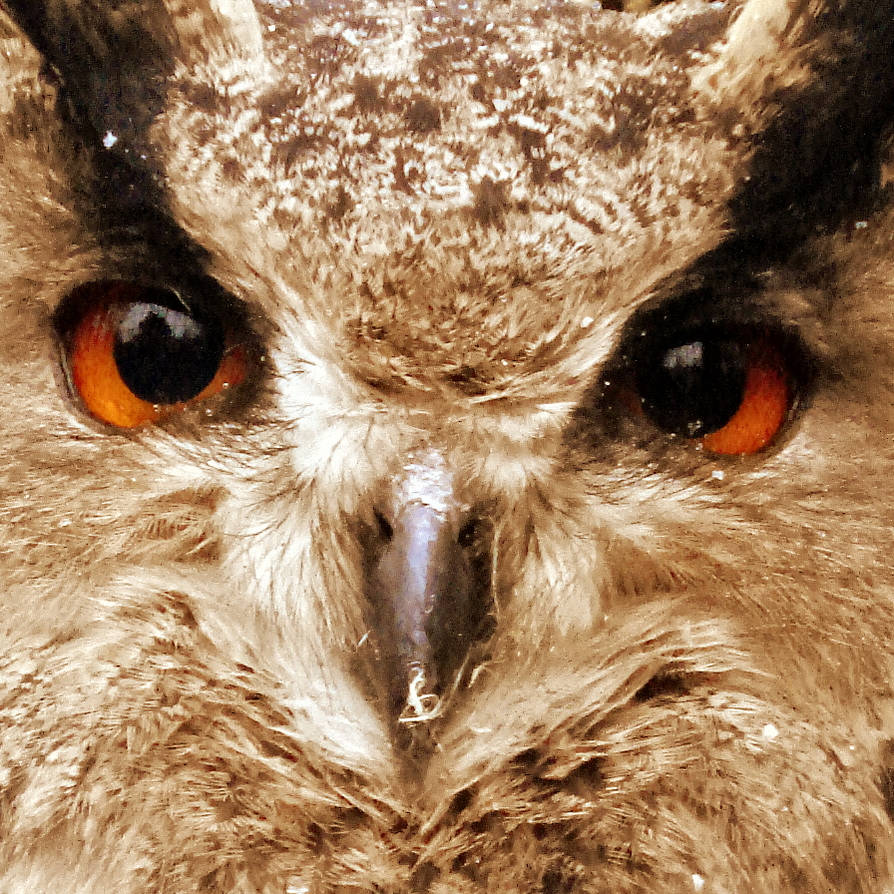 owl face by Dieffi