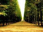 park symmetry