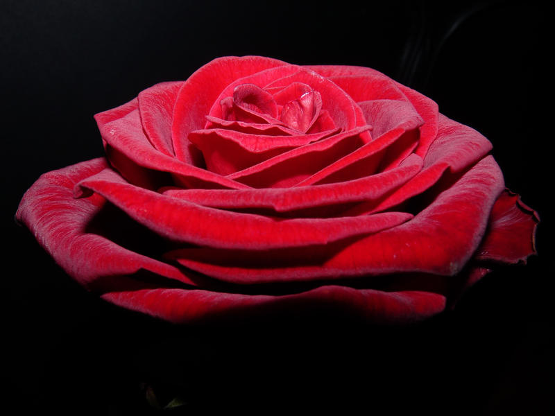LOVE by Dieffi