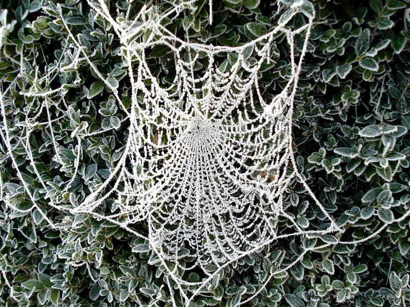 frozen web by Dieffi