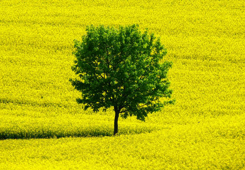 yellow world