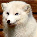 smiling blu eyes