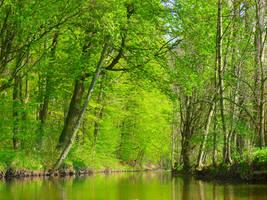Green Water by Dieffi
