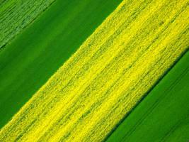 yellow transversal by Dieffi