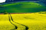 field of gold by Dieffi