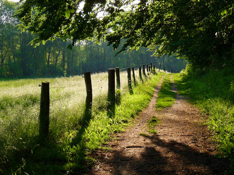 my way into the summer sun