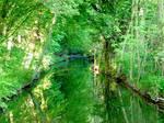 green water in the summer sun