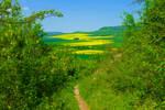 green summer by Dieffi