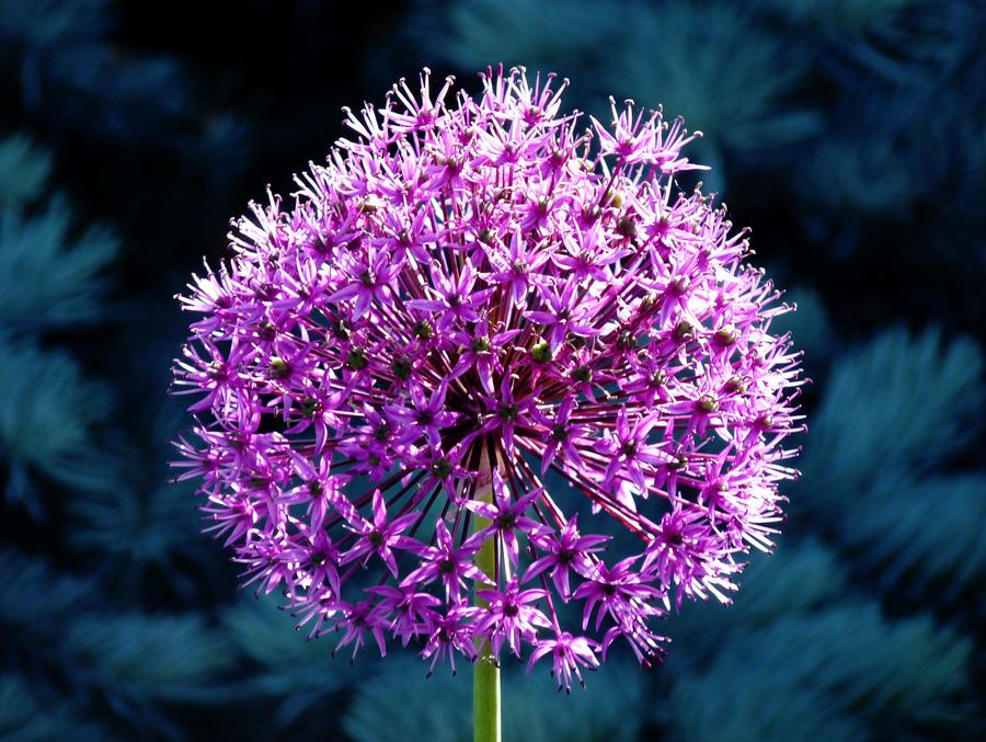 A flower for Kristi by Dieffi
