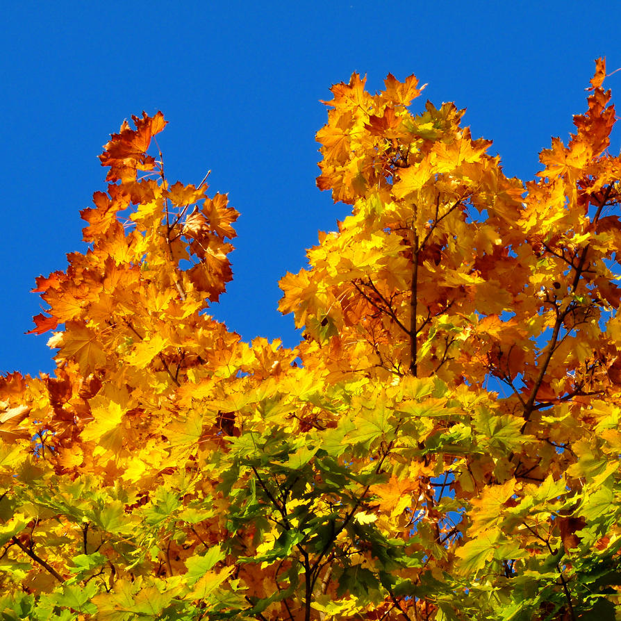 colours of fall by Dieffi