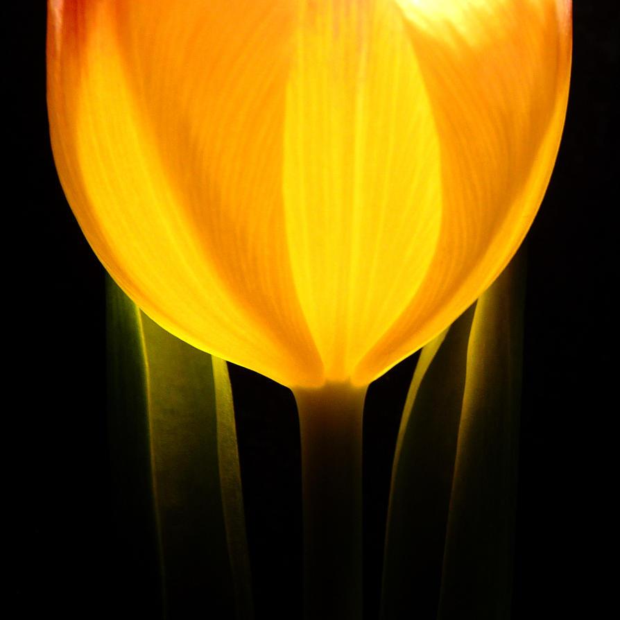 flower light by Dieffi