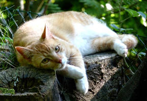 relaxed cat by Dieffi