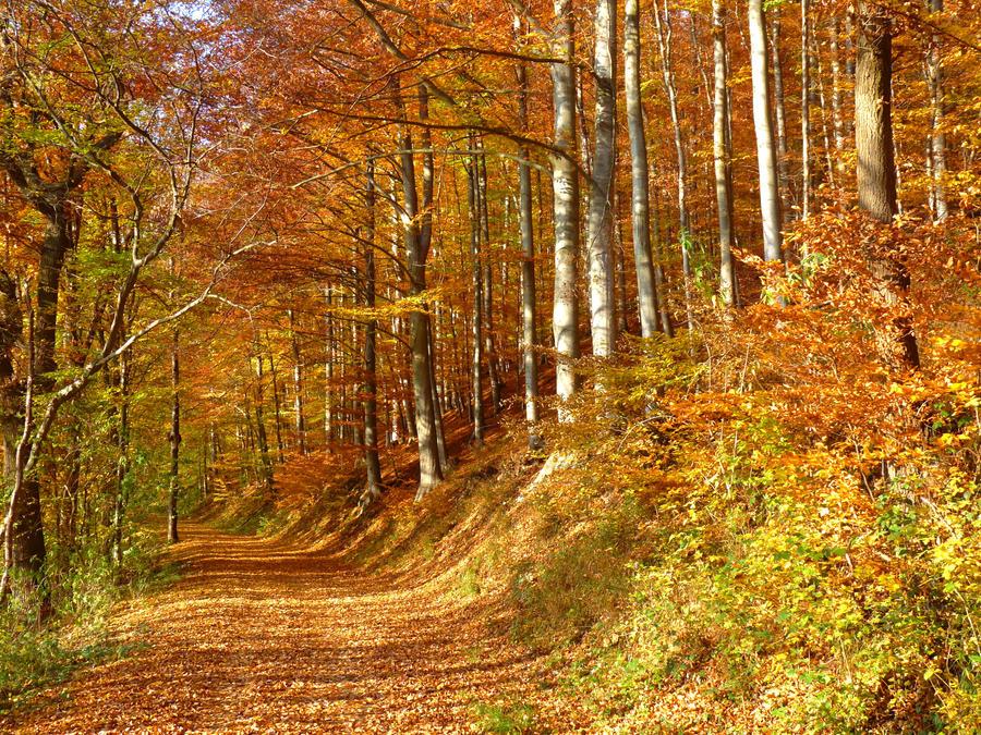 Golden November by Dieffi