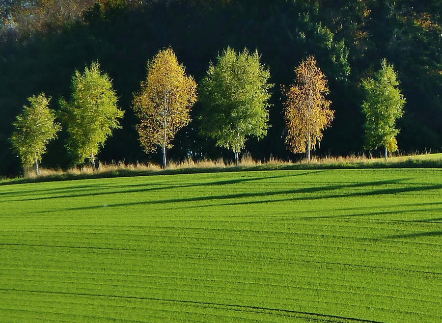Green October by Dieffi