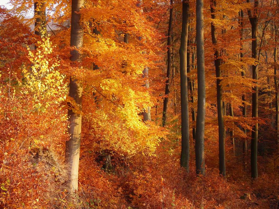 golden forest by Dieffi