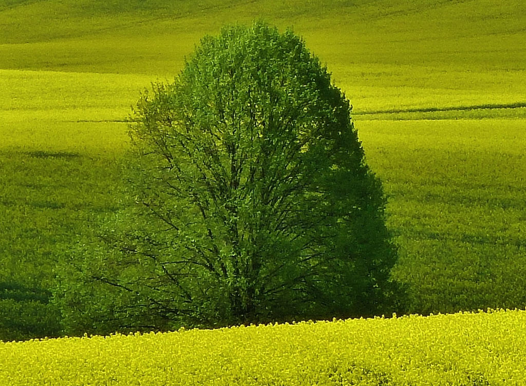 the green in the yellow by Dieffi
