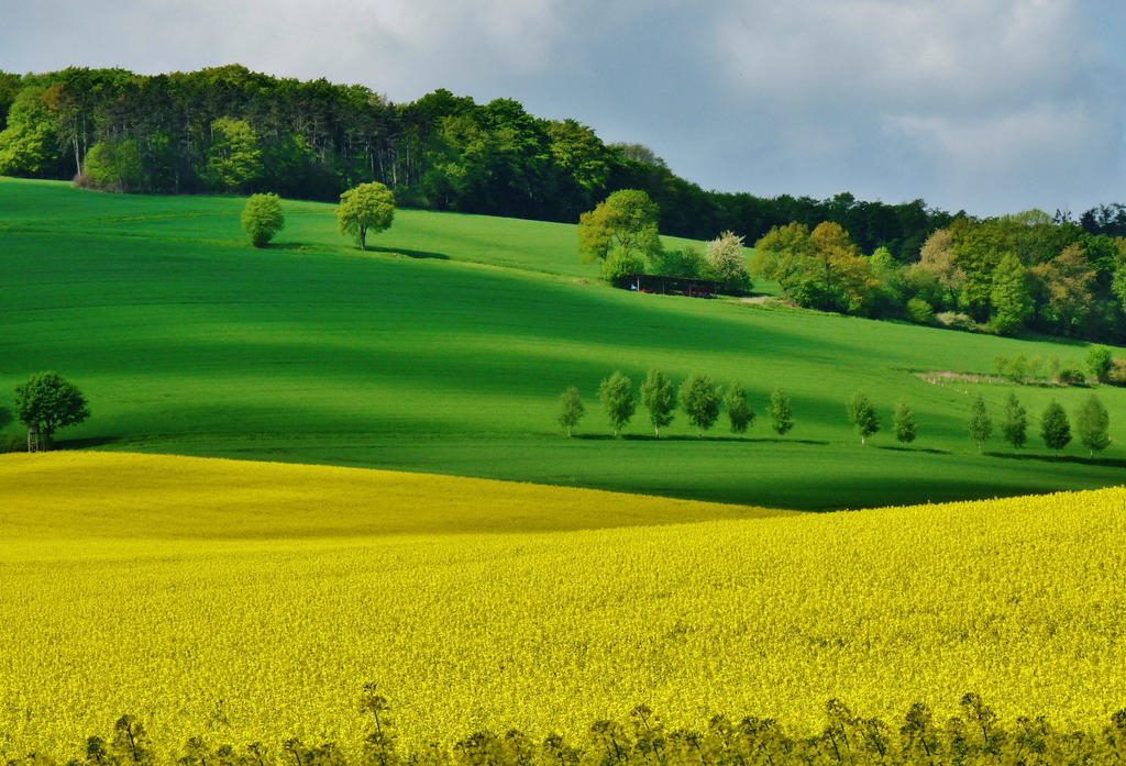 Fields in May by Dieffi