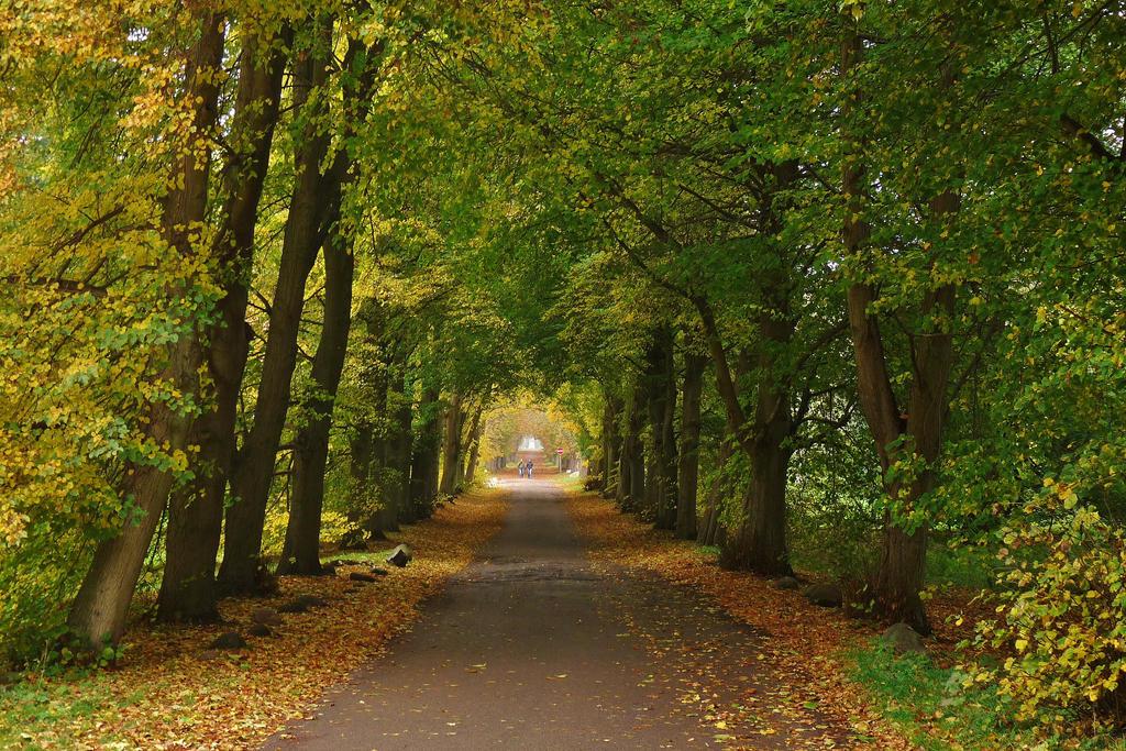 autumnal street by Dieffi