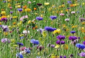 flowers of summer by Dieffi