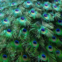 blue eyes by Dieffi