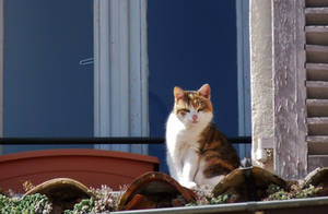 French cat on the roof by Dieffi