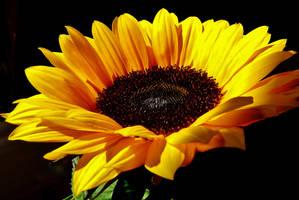 A flower for Baerbel by Dieffi