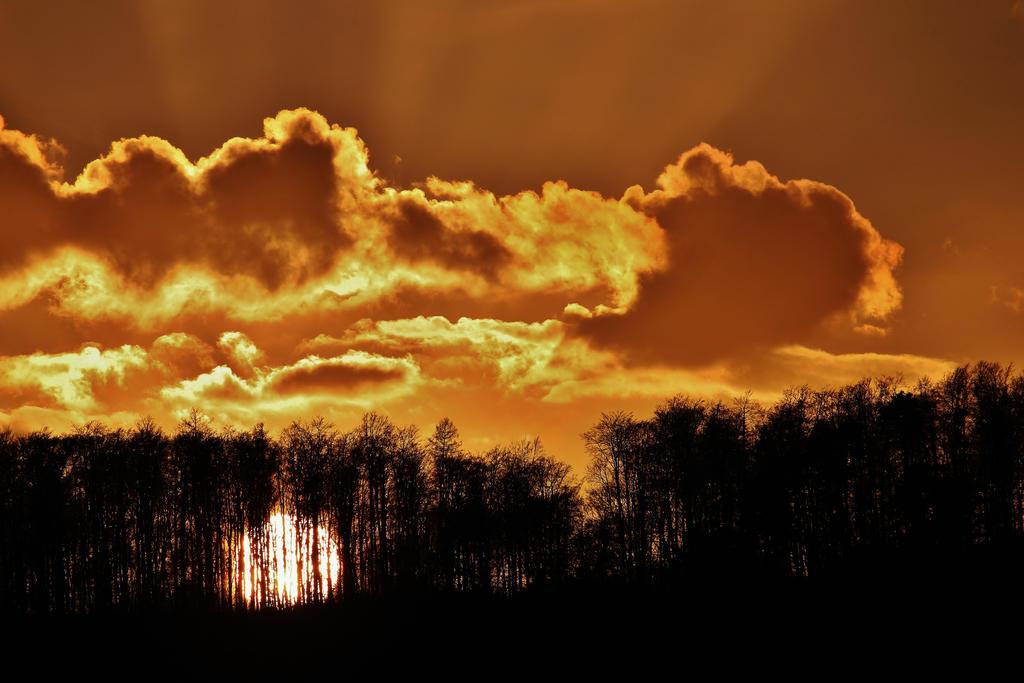 golden wood by Dieffi