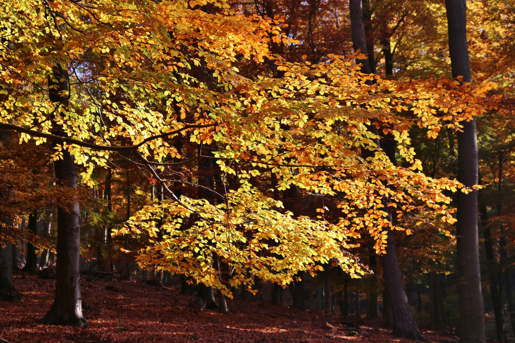 golden light in the forest by Dieffi